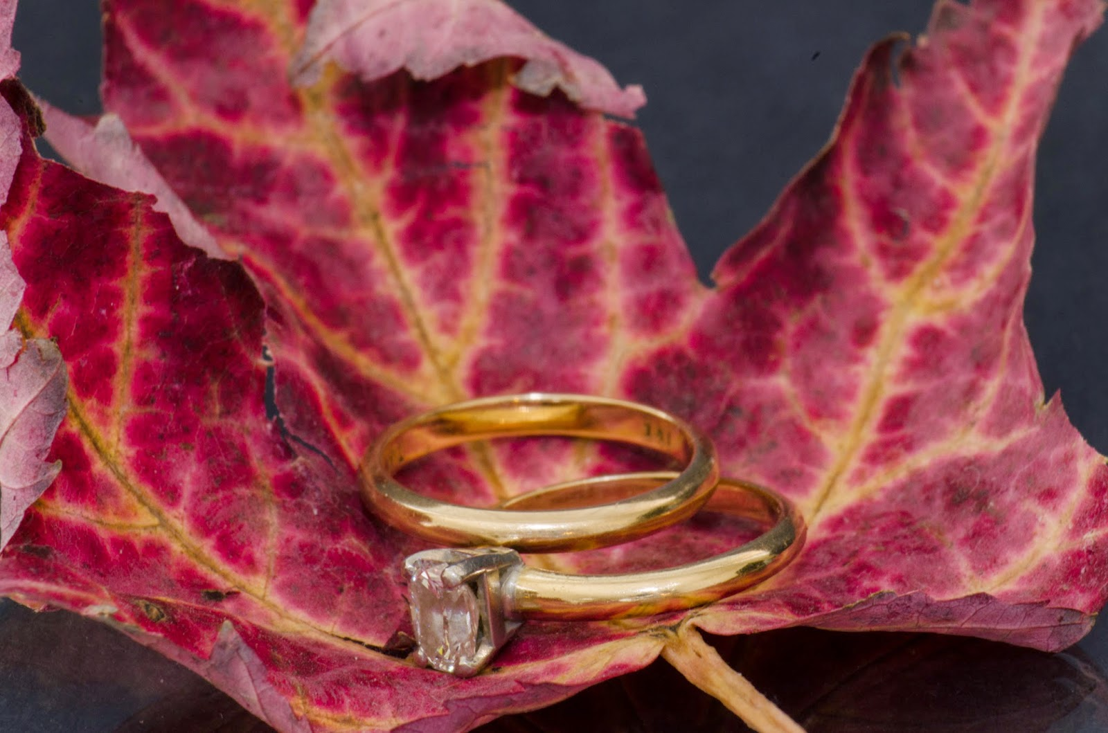 image of engagement and wedding rings resting on a dried maple leaf