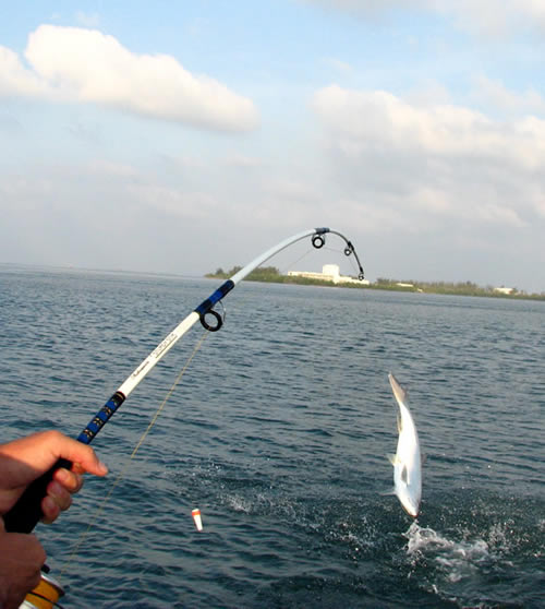 Best fishing locations in indonesia