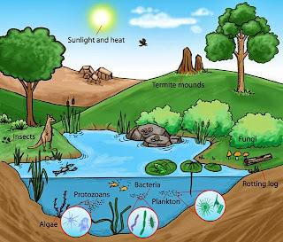 O que é ecossistema?
