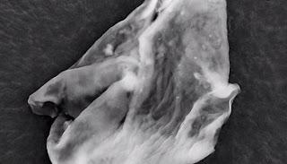 A crosta negra, rica em material orgânico, e lagos gelados encontrados pelo robô Philae seriam possíveis devido à presença de micróbios. Além disso, a nave espacial Rosetta, que orbita em torno do astro, teria encontrado aglomerados estranhos de material orgânico que se assemelham a partículas virais. Os dados indicam que organismos que contêm sais anti congelamento poderiam estar ativos em temperaturas abaixo de -40 graus, como as que aparecem no cometa. O astro possui áreas congeladas cobertas de material orgânico e os micro-organismos estariam envolvidos na formação dessas estruturas de gelo.