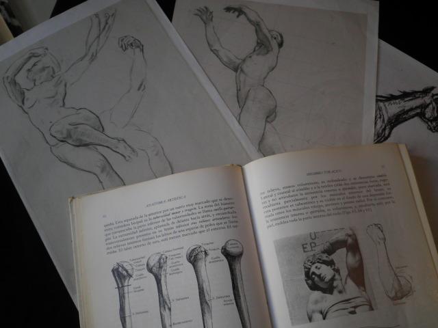 Clases de Dibujo y Pintura online: Anatomía artística