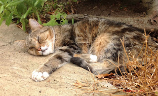 Sparky the Cat lazing in the sun.