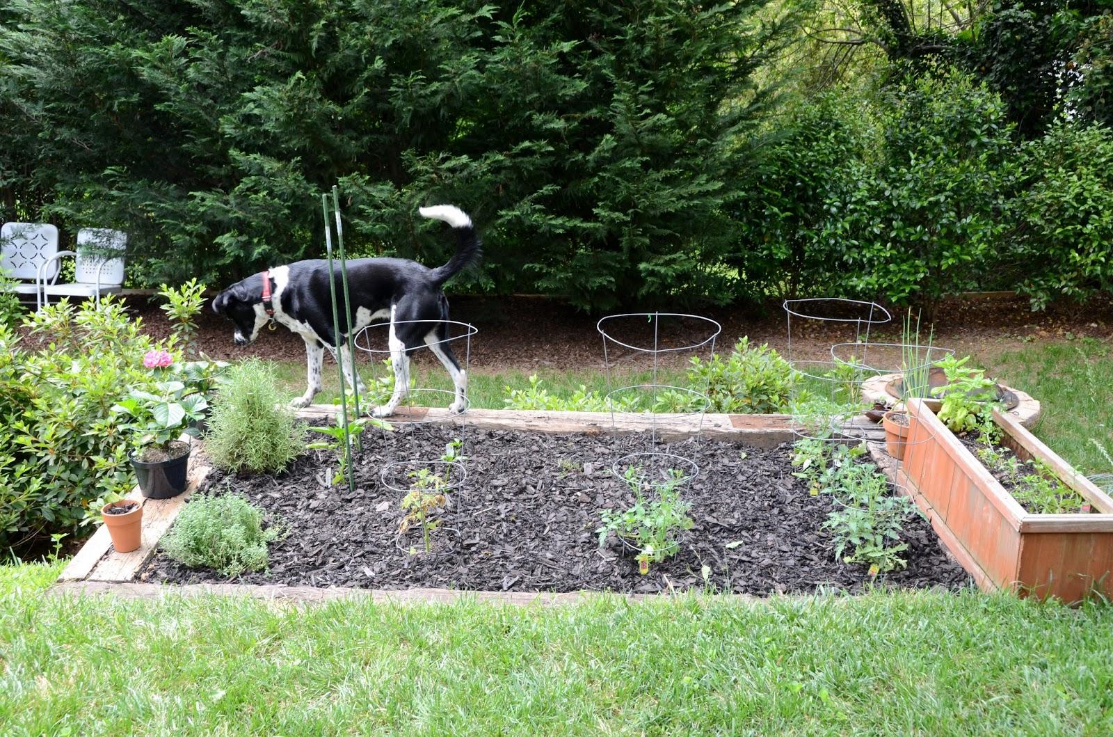 Iron Twine Backyard Update