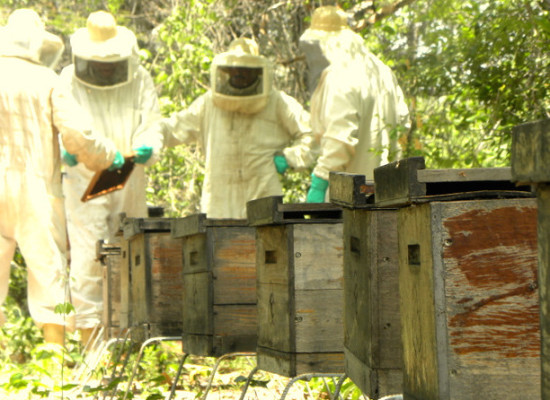 Mexican Judge Pulls Monsanto's GMO Soybeans Permit to Protect Honey Production
