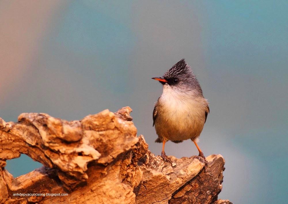 Ảnh động vật: Chú chim xinh đẹp 2 9