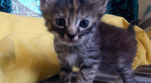 Foto Kucing Lucu Imut dan Menggemaskan 23