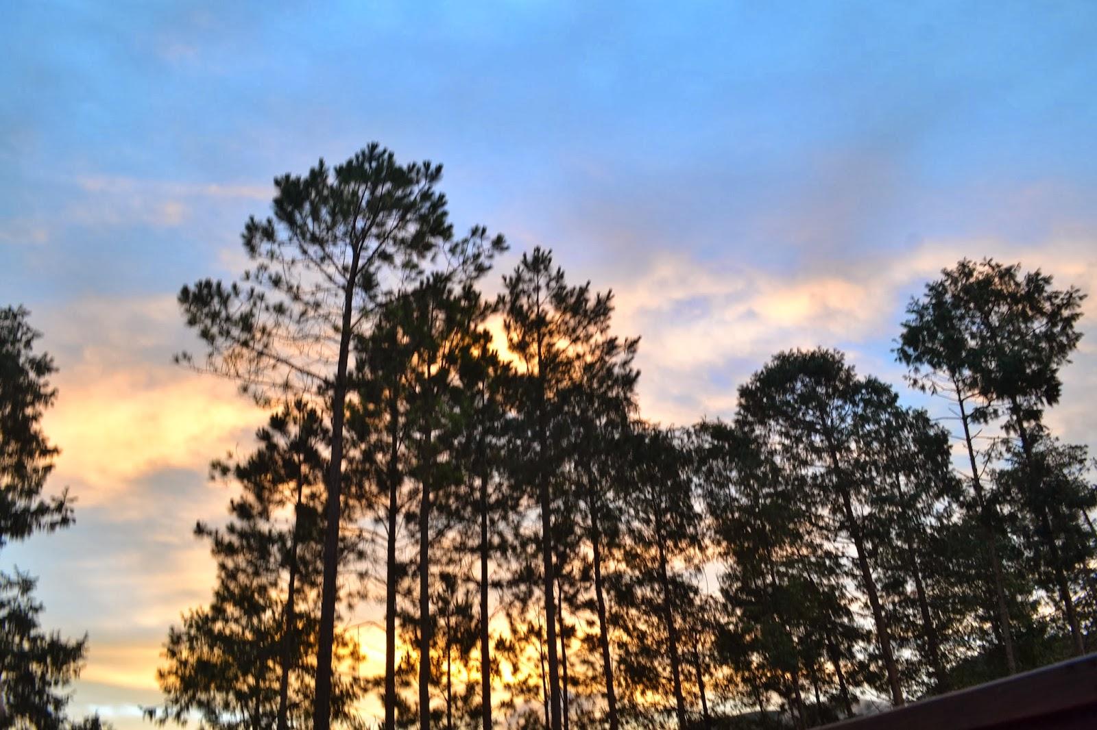 Sunset sky through the trees