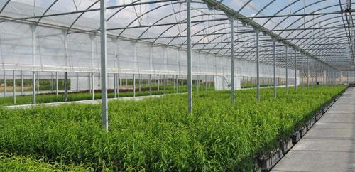 Info flores los tipos de viveros m s habituales for Construccion de viveros e invernaderos