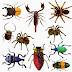 مشكل تواجد الحشرات في المنزل هده بعض الحلول