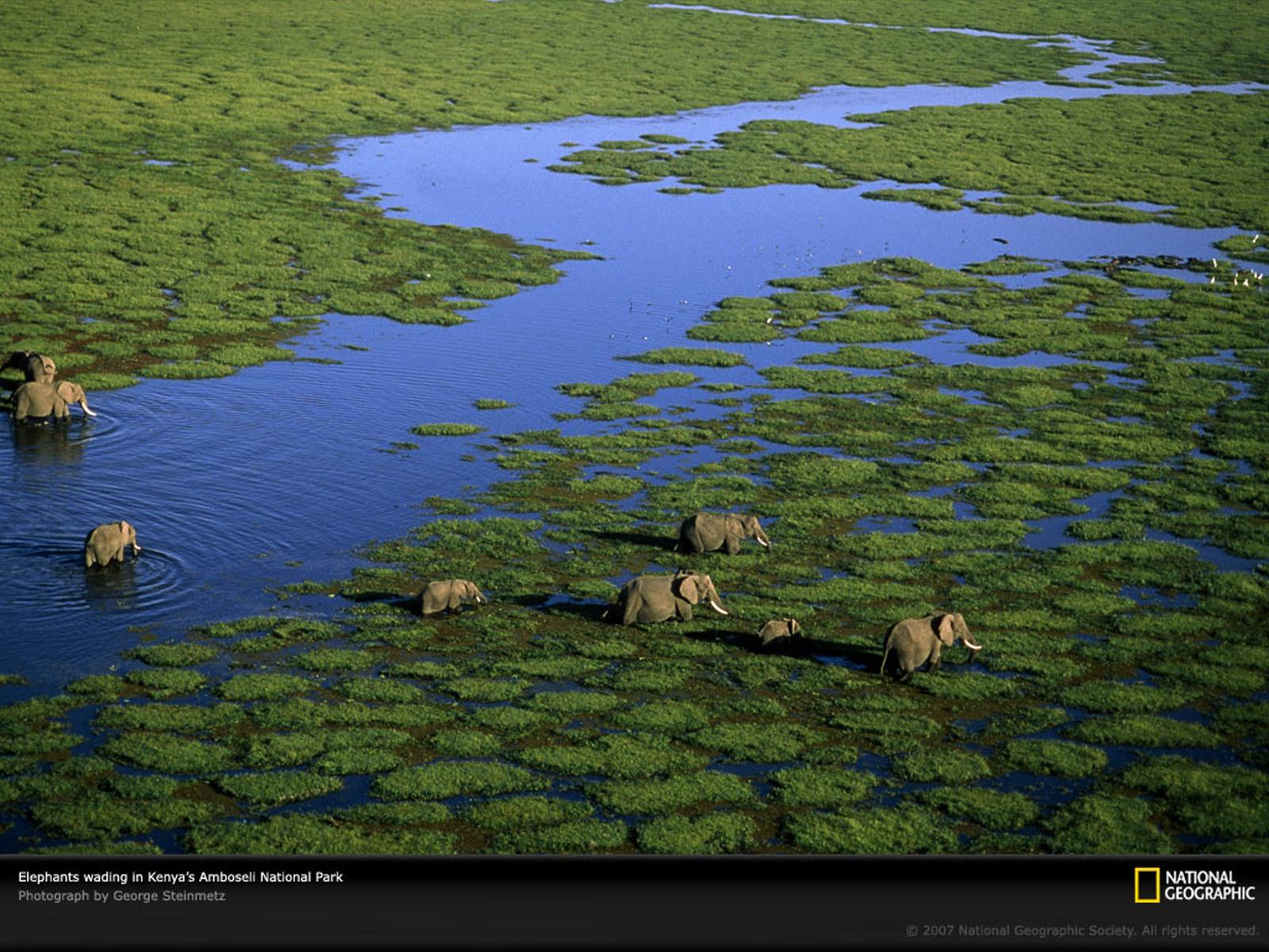 http://4.bp.blogspot.com/-zU72rEEySEI/Tc_1a0PcPyI/AAAAAAAABpw/WemYnnlzo58/s1600/national_geographic_8.jpg