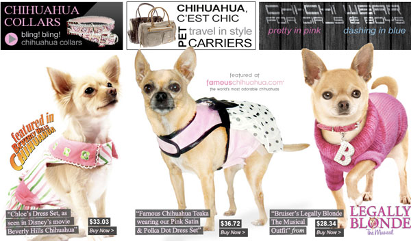 How to care for and train chihuahua dog dog training - Dog clothes for chihuahuas ...