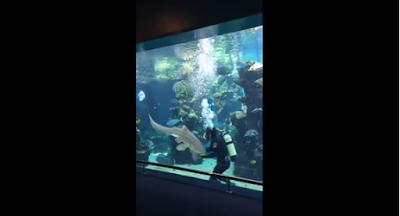 A shark encounter in a glass tank