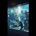 What this shark did to the aquarium diver is unbelievable!