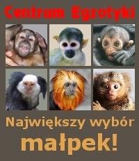 Chesz kupić małpkę?