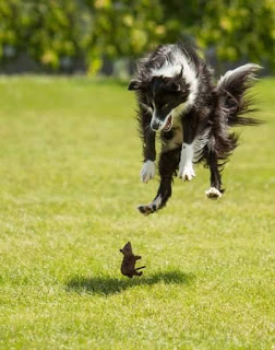 Chó sợ chuột