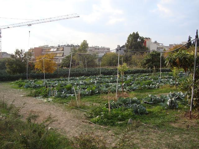 www.bioprasino.gr