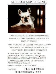 Bulldog Frances Perdido!!! en Malaga