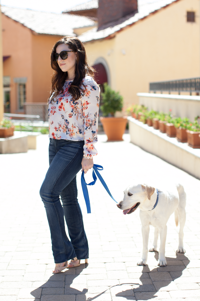 Seven For All Manking Bootcut Denim, Karen Walker Sunglasses, Labrador Retriever