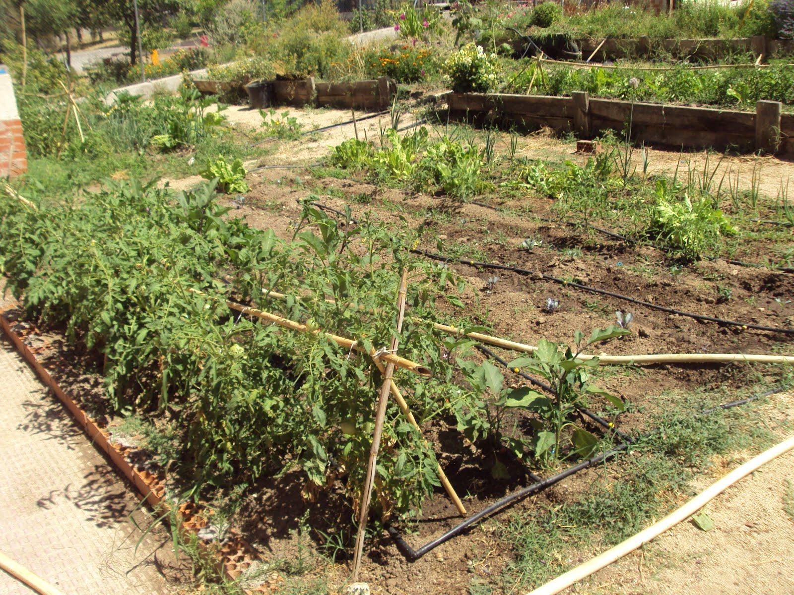 En torno al huerto el huerto escolar en vacaciones for Plantas beneficiosas para el huerto