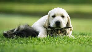 Mua sắm cho thú cưng