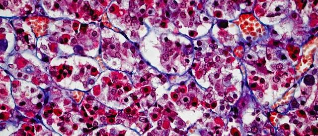 Hormonas, sistema endocrino y biologia