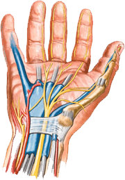 the description of the carpal tunnel syndrome causes by the use of computers Carpal tunnel syndrome and other repetitive use trauma injury seen in the workers' compensation context is carpal tunnel syndrome uriarte & carr, llp.