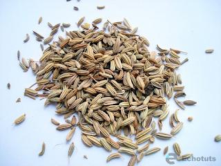 Buah tanaman adas - Manfaat dan Khasiat tanaman Adas (Foeniculum Vulgare) - echotuts