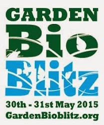 Garden Bioblitz 2015 - join in!