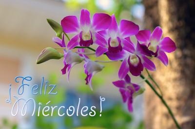 Orquídeas con mensaje de feliz miércoles para compartir