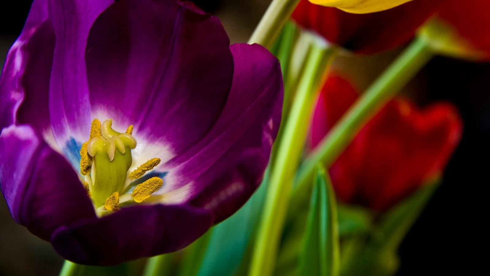 Resultado de imagen de postales de flores