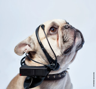 Headfone canino