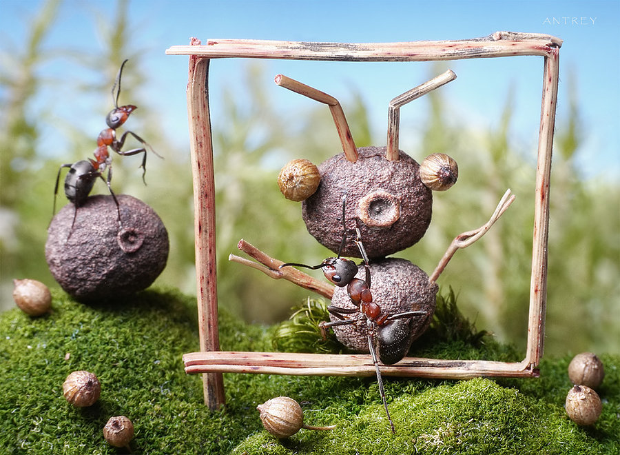10-Portrait-of-a-friend-Andrey-Pavlov-Photographs-of-Ants-an-Affordable-Journey-to-a-Parallel-World
