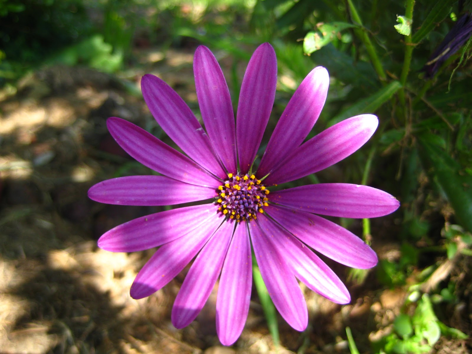 Catherine south south african summer flowers south african summer flowers izmirmasajfo