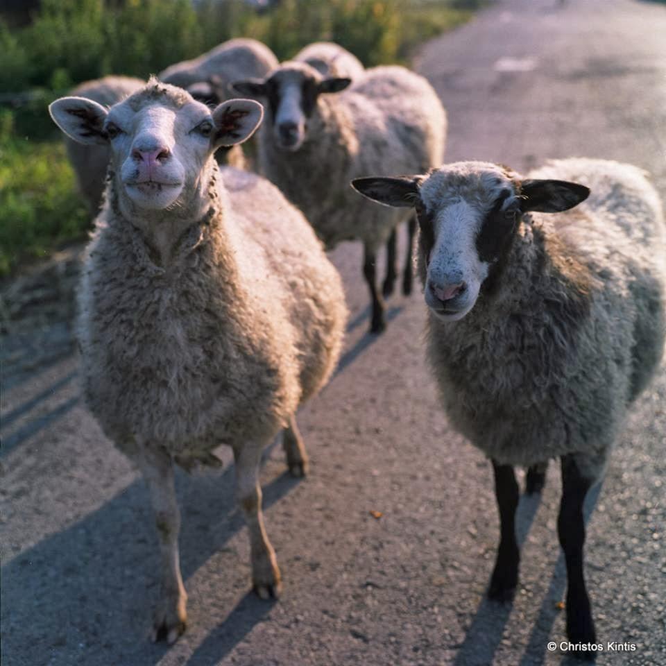 Ο Ελληνικός λαός δεν είναι πρόβατα αυτός είναι ένας λόγος να μην τον υποτιμά η κυβέρνηση