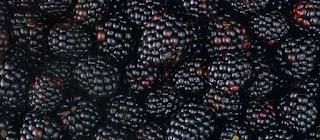 Kissel from a strawberry, wild strawberry, raspberry, blackberry