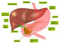 Obat Yang Dapat Menyembuhkan Penyakit Liver Secara Alami