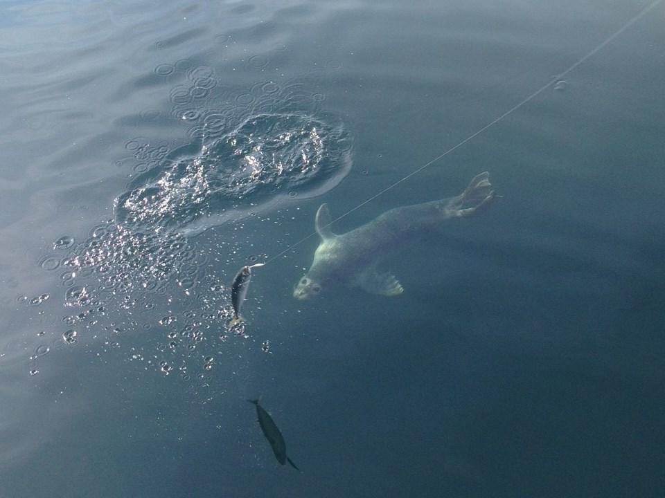 Reel in august al gauron halfday for Al gauron fishing