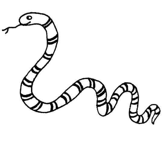 animal coloring pages, zoo coloring pages title=