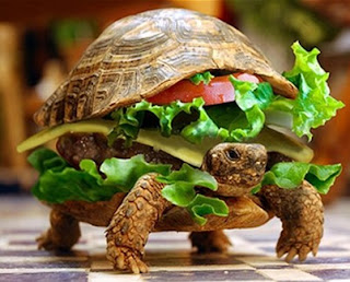 Man disguises turtle as burger