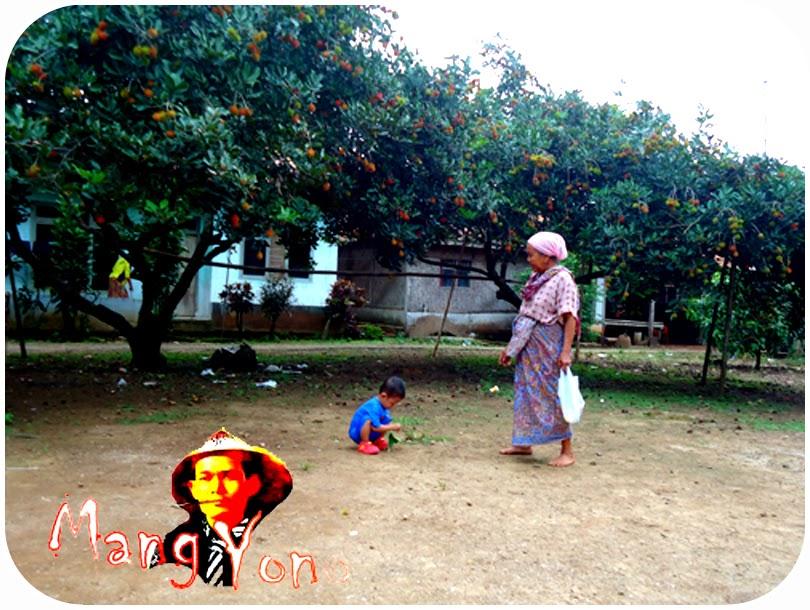 Rambutan Berbuah - Buah Rambutan Di Sekitar Rumah Saya Di Kabupaten Subang