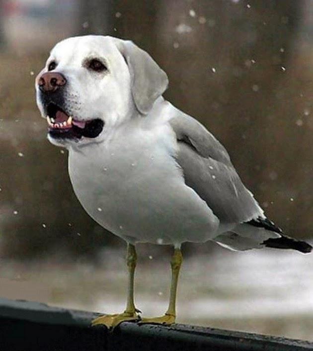 pet-head-for-birds-3
