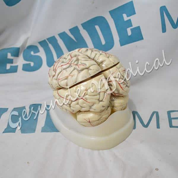 toko torso otak 8 bagian