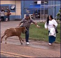Carneiro ataca pessoas em frente a penitenciária