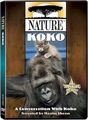 Vidéo : Conversations avec Koko le gorille