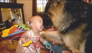 funny photo: baby with dog german shepherd