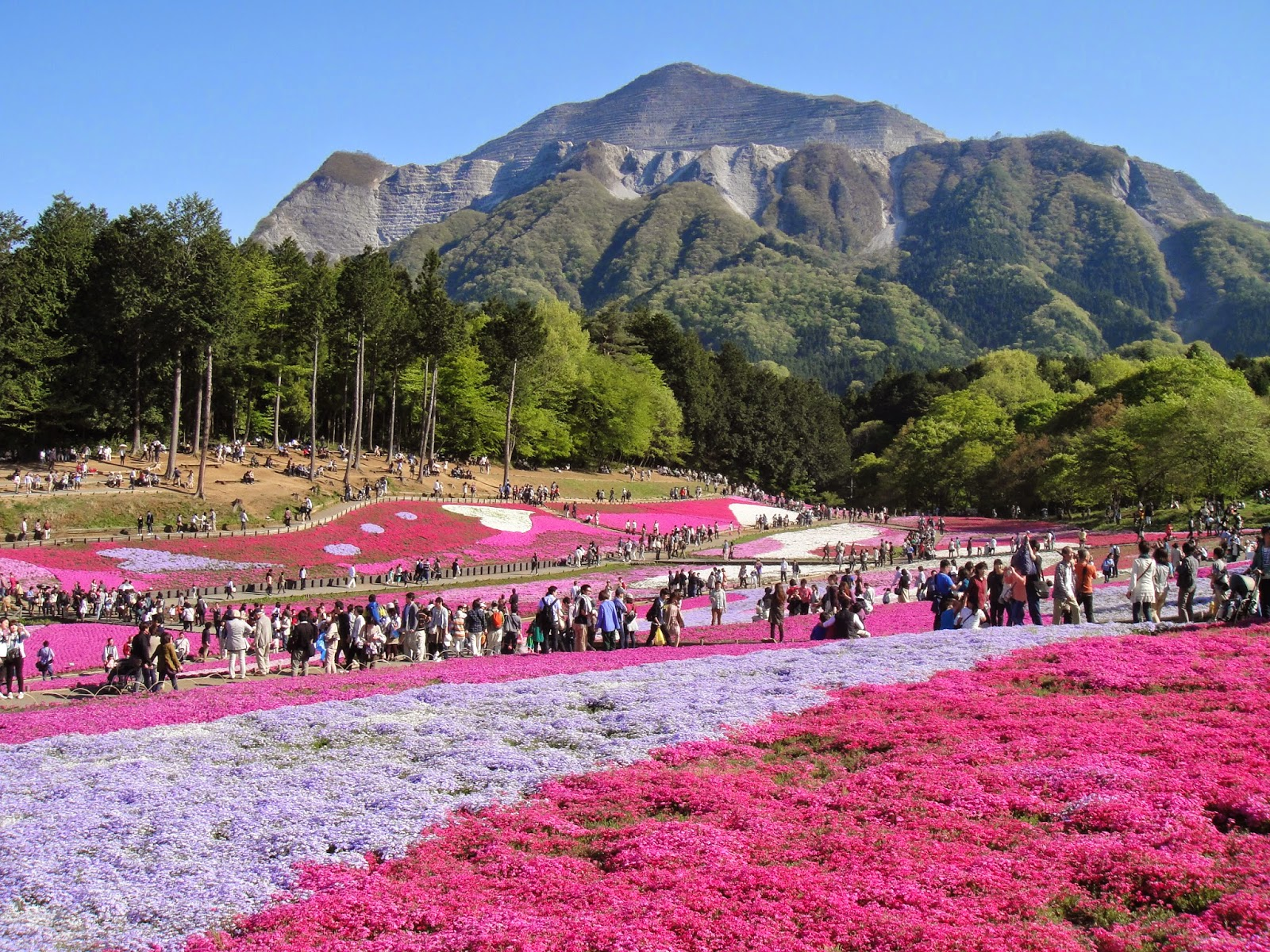 Discover Tokyo Beautiful Places Never Seen Before Shibazakura In Chichibu
