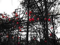 Estructura Metalica Rosas Rosedal Prado