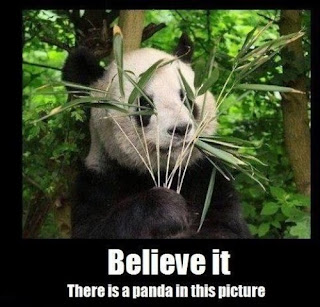 Believe it. There is a panda in this picture