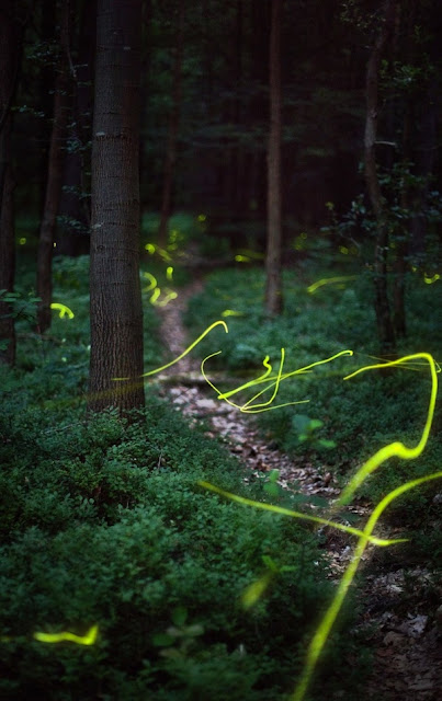 Zooming Fireflies