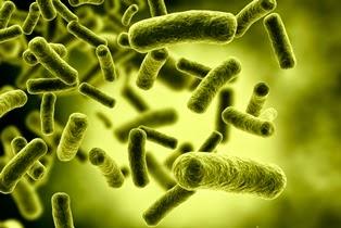 Antibiótico que no desarrolla resistencia Bacteriana